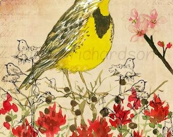 Meadowlark Watercolor Flower Collage Print Indian Paintbrush