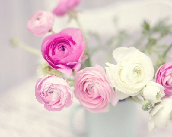 Flower photography pink white ranunculus flowers french mightylinksfo