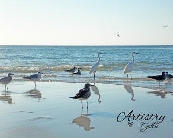Exotic birds, White birds, Florida birds,Beach birds,Soft blue,  Beach Photography, Landscape, Ocean photography, Coastal Wall Art, Nautical