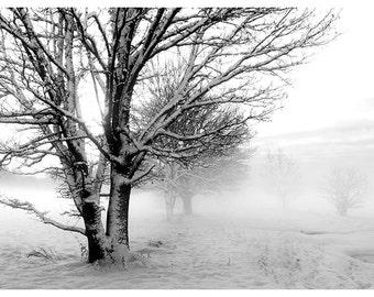 Fine art photography print, nature photography. Winter morning. Latvia.