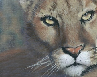 The Eyes Have It- Original Prismacolor Portrait of A Cougar- Prints and Cards