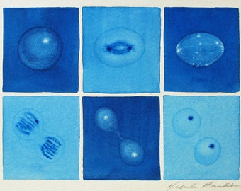 Blue Mitosis  - original watercolor - cell cycle