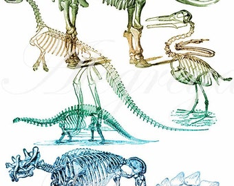 5 Fun Dinosaur Skeleton .abr brushes with corresponding .png files