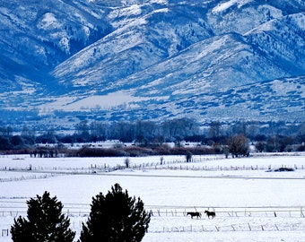 Landscape Photography -Peaceful Morning In Park City - Nature, Equestrian, Winter, Snow, Travel, Mountain, Serene, Fine Art Photography