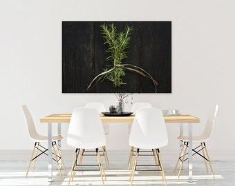 rosemary // food photography print // kitchen decor // dining room // canvas art // canvas print // rustic farmhouse wall art