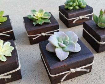 Succulent WEDDING Favors, dark wood, Succulent Bridal Shower favor, Baby shower favor, Special Event Favor, Spring or summer