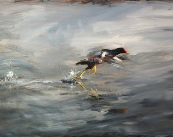 FINE ART PRINT A2 size, from original oil painting 'Moorhen at dawn' Nature, birds, wildlife