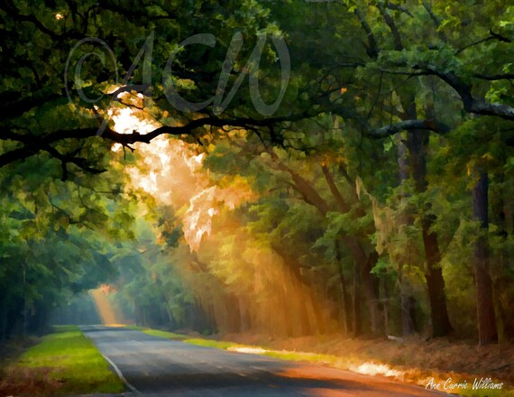 Sun Streaming Down on an Oak lined road on Edisto Island, South Carolina (canvas)
