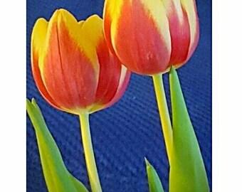 Greeting card - Orange Tulip