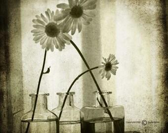 Yellow Grey Daisies Photograph--Truly I Do--TTV Fine Art