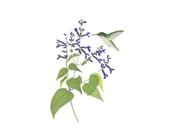 Watercolor Hummingbird and Flowers Print / Blue Salvia / Garden Sage Floral Archival Fine Art / Nature Illustration Woodland / 4x6 5x7 8x10
