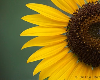Sunflower photo fine art flower print