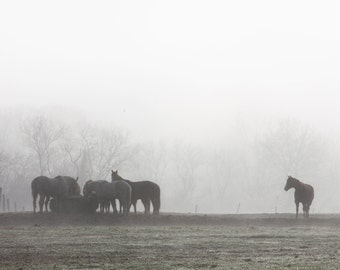 Horses in the Fog Print