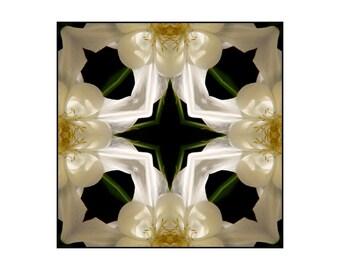 White & Green Columbine