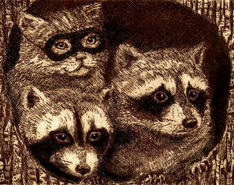 The Imposter  masked cat and raccoon giclee print