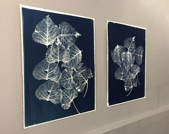 Original X-Ray Leaf Anatomy Cyanotype Signed