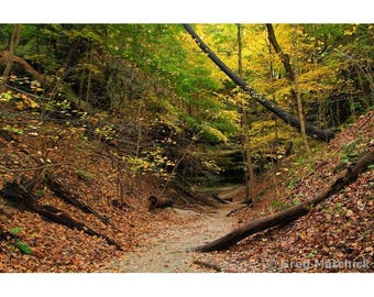 """Fine Art Color Landscape Nature Photography of Starved Rock State Park in Illinois - """"Lonetree Canyon 1"""""""
