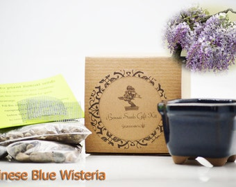 9GreenBox - Chinese Blue Wisteria Bonsai Seed Kit- Gift - Complete Kit to Grow Chinese Blue Wisteria Bonsa from Seed