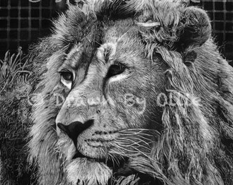 Lion Giclée Print Graphite Pencil Drawing