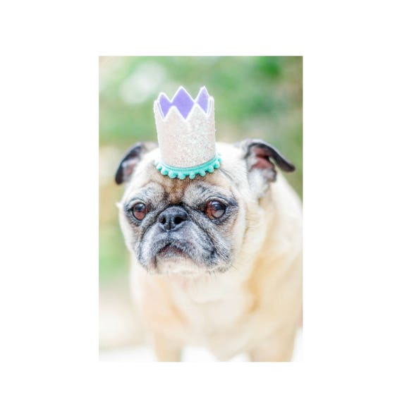 Pet Costume Birthday Hat || Animal Birthday Hat || Dog Party Hat || Dog Crown || Dog Birthday Crown || Pet Party Hat