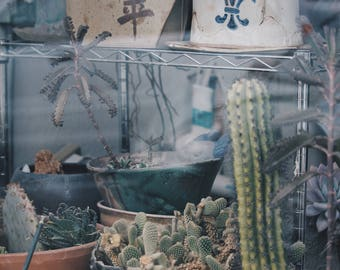 Cactus Collection : original 8x10 photography print