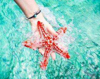 Red Starfish Photography, Starfish in Palm, Colorful Starfish Art, Starfish Picture, Starfish Fine Art Print, Fish Star, Beach Photography