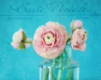 Ranunculus photo,shabby chic home decor,french typography,romantic, pink, white, aqua, floral photography, still life