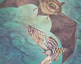 Bat Bats Print Severt Andrewson 11314 Scriptural Scripture