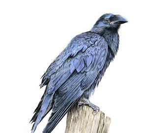 Raven - Limited Edition Giclee print from an Original painting by Gayle Mason