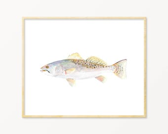 Speckled Trout Watercolor Art Print. Realistic Speckled Trout Wall Art. Trout Print. Fish Art. Father's Day Gift. Anger Gift. Lake House Art