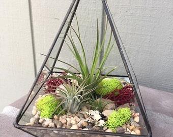 Glass Geometric Triangle Terrarium with Air Plants, KIT to make terrarium, DIY kit to make your own terrarium, air plants, terrarium