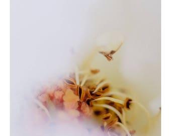 White Flower, Wall Art, Photo Print