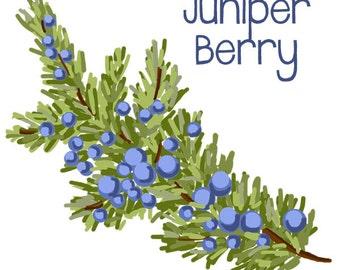 Juniper Berry Branch -  Original Art Download, 2 files, juniper berry clip art, juniper berries