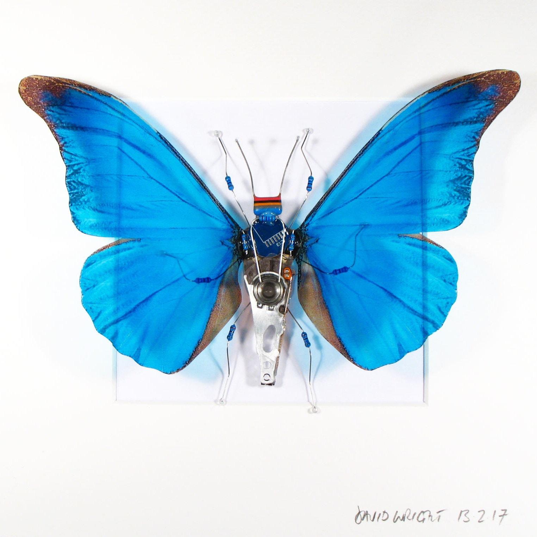 Blauer Schmetterling Schmetterling Flügel gerahmte Kunst