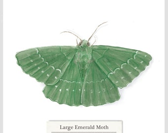 Large Emerald Moth - Print - Original Acrylic Painting - 15.6 x 15.6cm