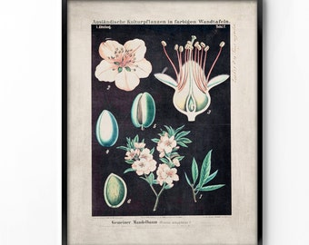 botanical wall art, printable art, wall decor, office decor, home decor, graphic art, art print, vintage botanical, instant download, floral