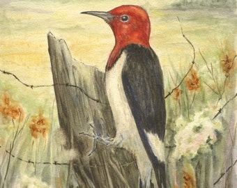 Red-headed Woodpecker Print 5 x 7 inches.
