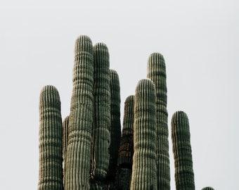 Saguaro Photo Print