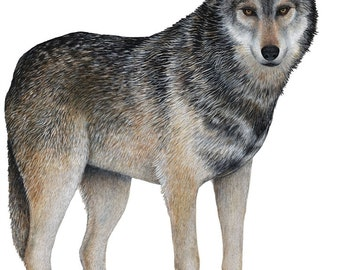 Gray Wolf Wall Decal