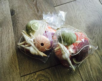 Assorted Shell Grab Bag Mix Sea Urchin Starfish Sand Dollar Shells