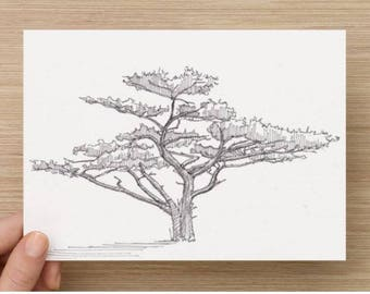 Ink Sketch of Tree on the Lost Coast Trail in Northern California - Drawing, Art, Nature, Landscape, Pen and Ink, 5x7, 8x10, Print