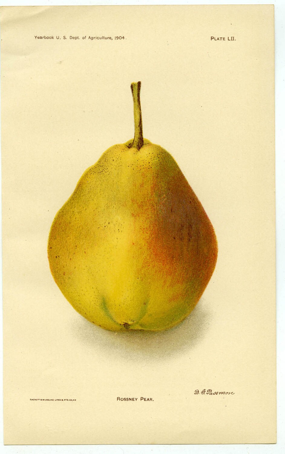 us color lithograph pear 1904 print signed