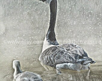 """Goose Mother Gosling, Fine Art Illustration, 6"""" x 6"""" Ready To Hang Wrapped Canvas Print, Original Art, Fine Art Photography, Canadian Goose"""