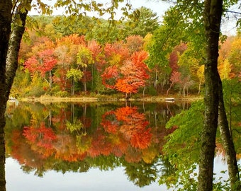 5 x 7 Framed Photo of Fall Foliage on Sebec Lake