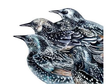 Starlings, watercolour print, wall art,bird paintings, starling watercolour, wildlife painting, bird watercolour