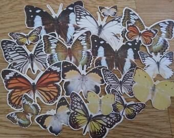Butterfly Die Cut Set, 19 pcs