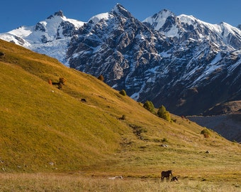 Landscape Photography, Nature Photography, Wall Decor, Georgia, Balkan, Tree, Mountain,Sky, Snow, Asia,Europe,Autumn, Horses
