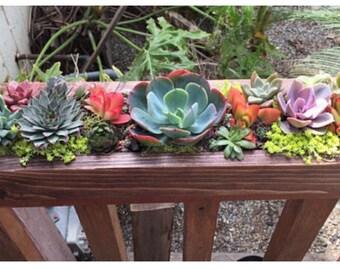 "Succulent arrangement garden Table Centerpiece in long Rustic wood planter box 20""-colorful live succulents. Window or wedding centerpiece."