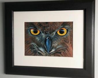Red Owl Study