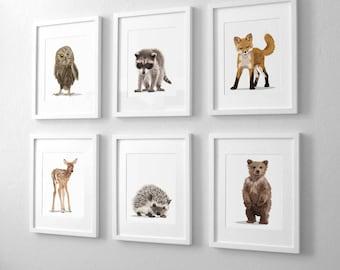 Woodland nursery art, baby animal art forest decor, set of six unframed prints - adventure explorer camping art